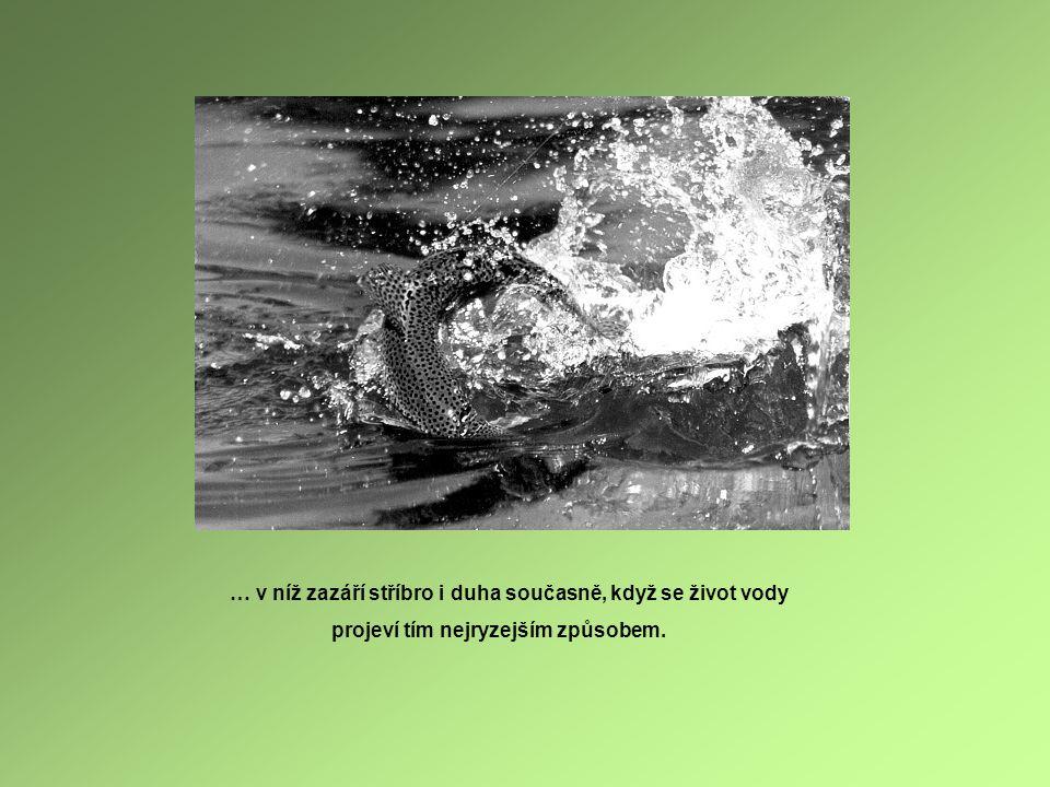 … v níž zazáří stříbro i duha současně, když se život vody projeví tím nejryzejším způsobem.
