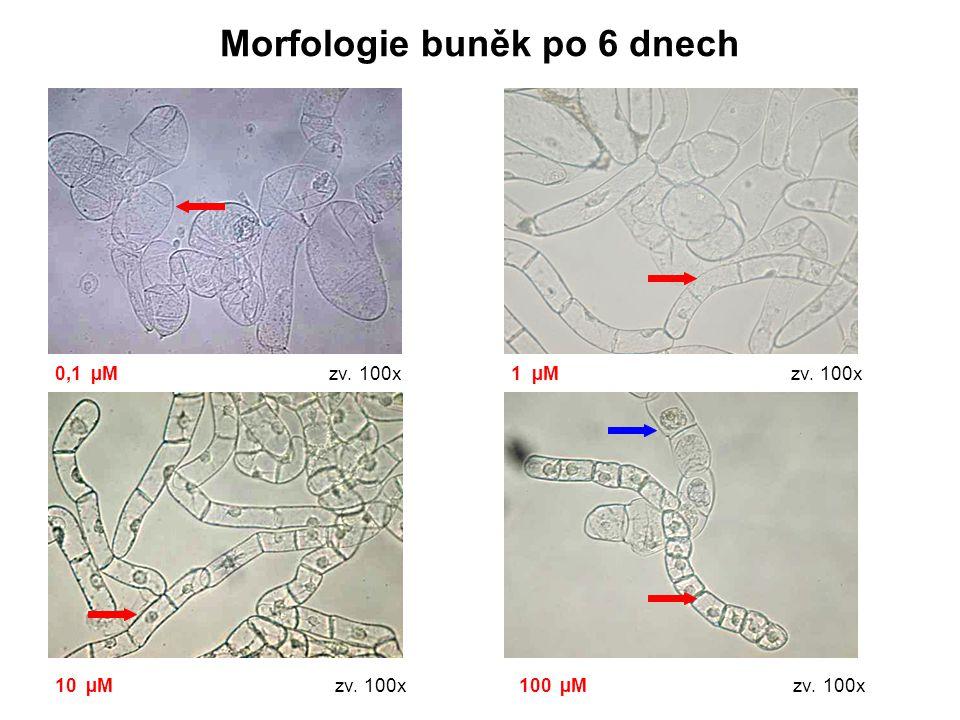 Morfologie buněk po 6 dnech 0,1 µM zv. 100x 1 µM zv. 100x 10 µM zv. 100x 100 µM zv. 100x