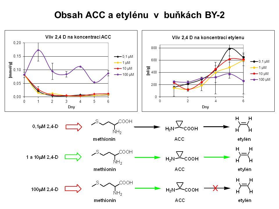 Obsah ACC a etylénu v buňkách BY-2
