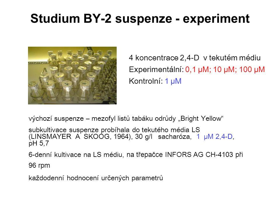 """Studium BY-2 suspenze - experiment výchozí suspenze – mezofyl listů tabáku odrůdy """"Bright Yellow"""" subkultivace suspenze probíhala do tekutého média LS"""