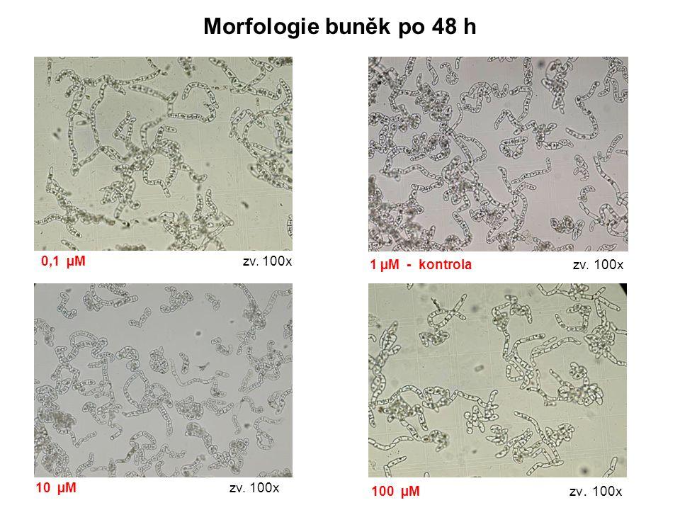 Morfologie buněk po 48 h 1 µM - kontrola zv. 100x 0,1 µM zv. 100x 10 µM zv. 100x 100 µM zv. 100x