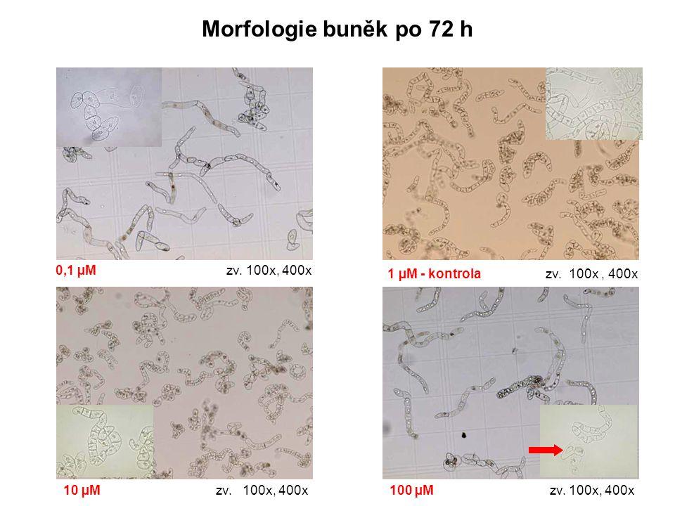 Morfologie buněk po 72 h 0,1 µM zv. 100x, 400x 1 µM - kontrola zv. 100x, 400x 10 µM zv. 100x, 400x100 µM zv. 100x, 400x