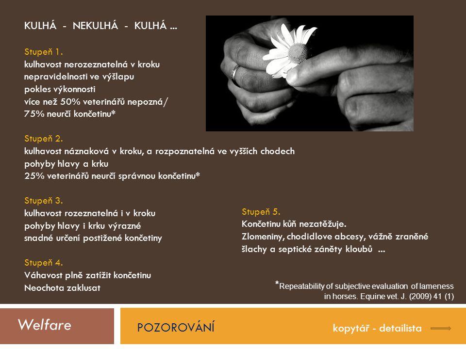 Welfare POZOROVÁNÍ kopytář - detailista KULHÁ - NEKULHÁ - KULHÁ...