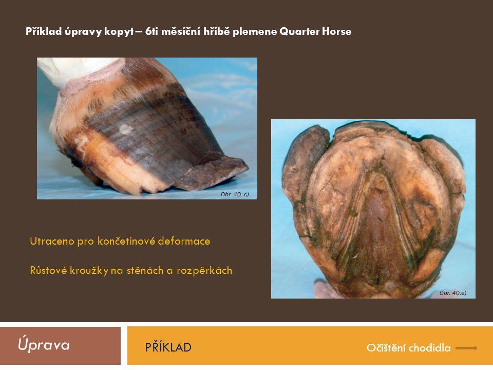 Úprava PŘÍKLAD Očištění chodidla Příklad úpravy kopyt – 6ti měsíční hříbě plemene Quarter Horse Utraceno pro končetinové deformace Růstové kroužky na stěnách a rozpěrkách