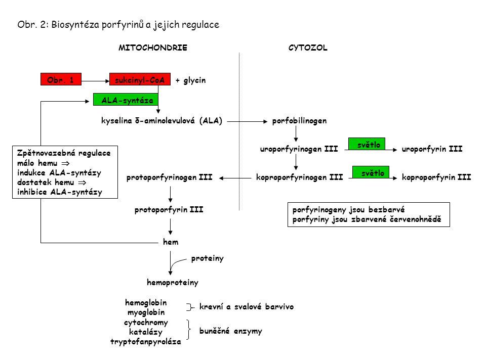 sukcinyl-CoA Obr. 2: Biosyntéza porfyrinů a jejich regulace MITOCHONDRIECYTOZOL kyselina δ-aminolevulová (ALA)porfobilinogen uroporfyrinogen III kopro