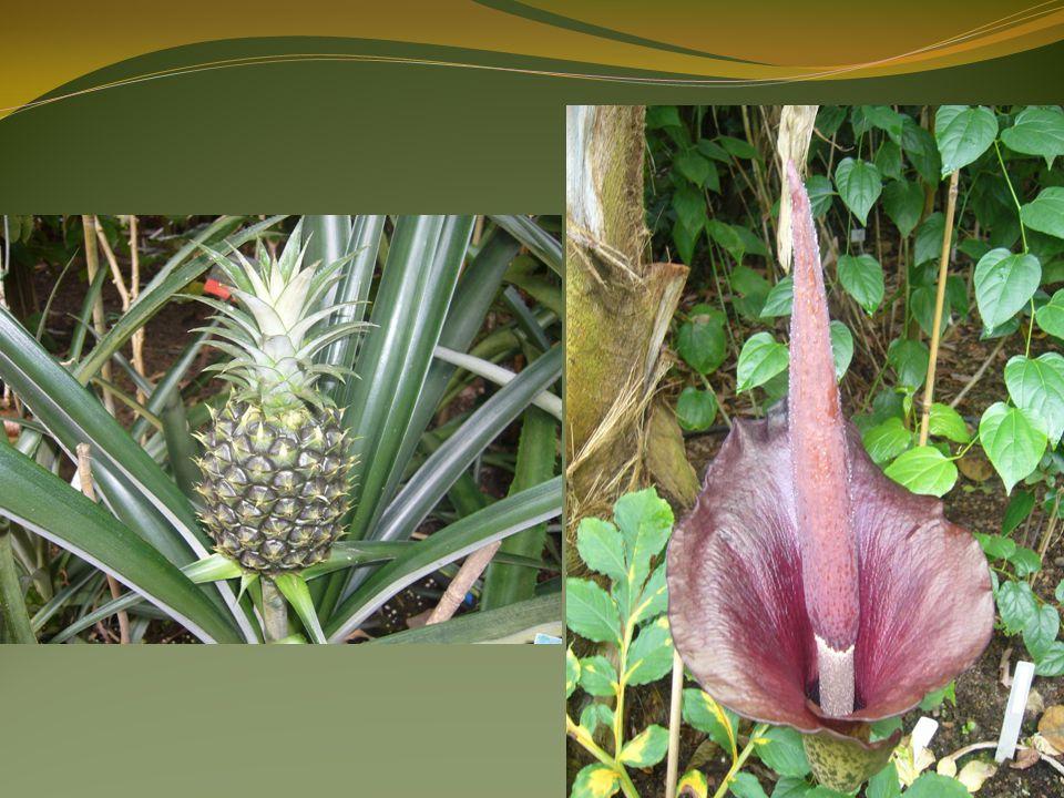 Použitá literatura WIKIPEDIA.Tropický deštný les [online].