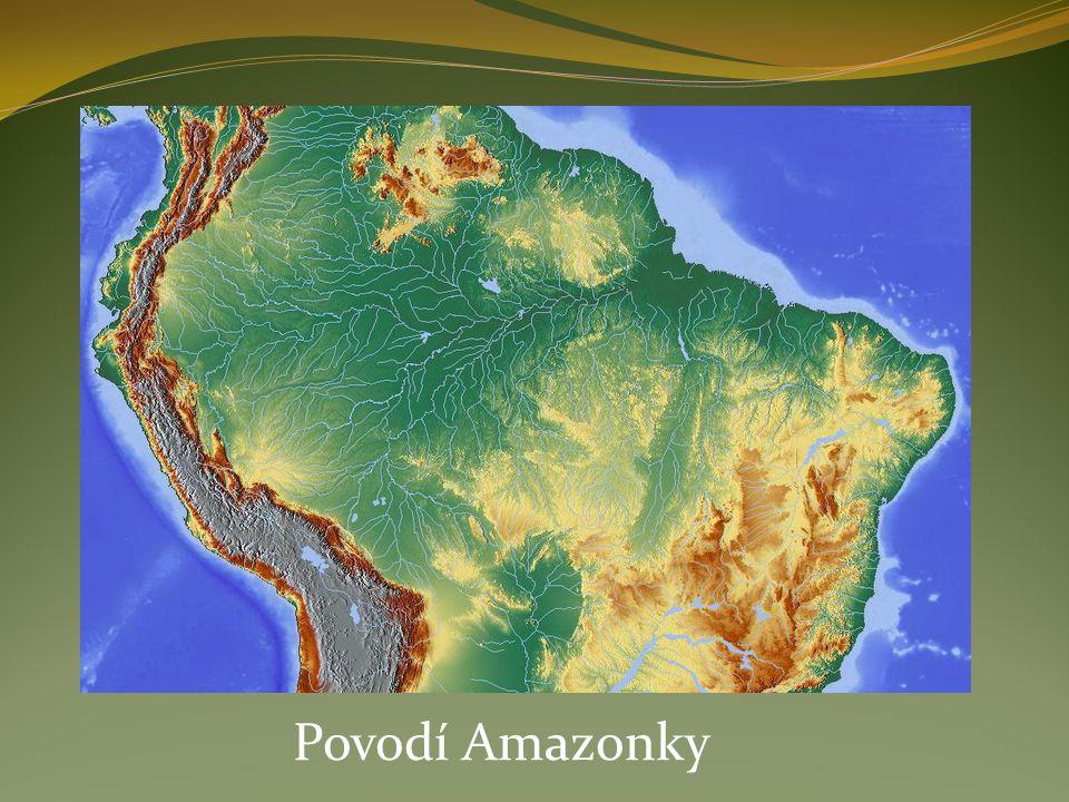 Ryby – 2 000 druhů ryb (piraňa, rejnok, úhoř,…) Plazi – hadi, leguáni, krokodýli, kajmani Ptáci – papoušci (andulky, korely, kakadu, ara, …) Hmyz – nepřeberné množství motýlů, mravenců, termitů Savci: opice – gorily, šimpanz (Afrika) orangutani (Asie) tygr (v Asii) jaguár (v Americe)