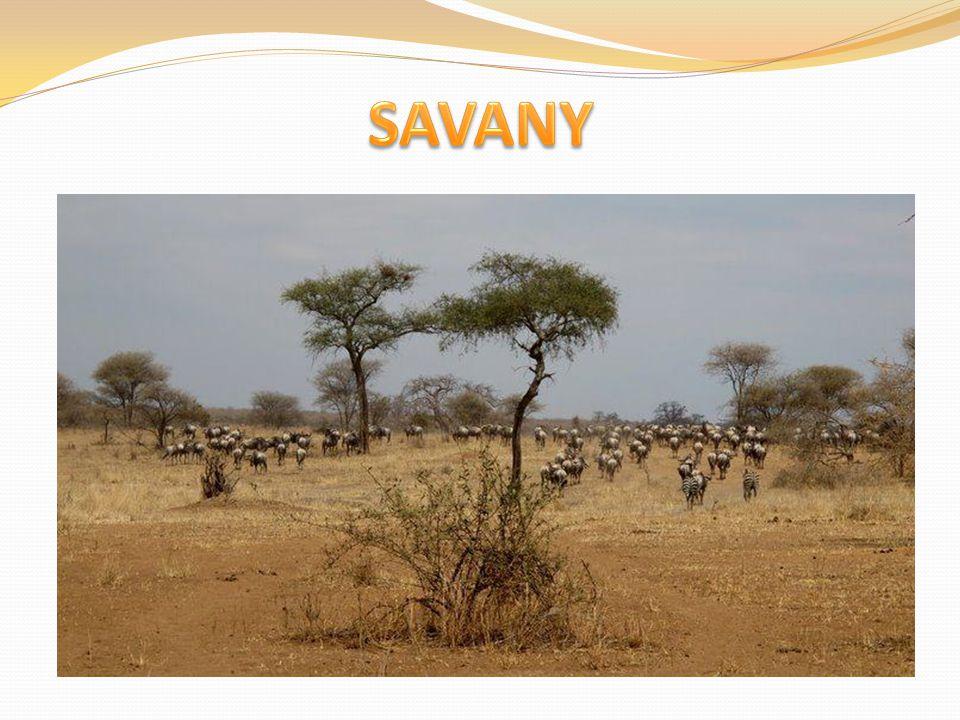 Savany se rozkládají směrem k severu a jihu od tropických deštných lesů.