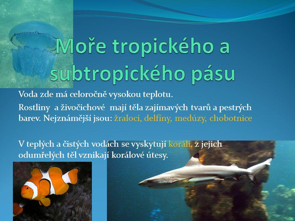 Voda zde má celoročně vysokou teplotu. Rostliny a živočichové mají těla zajímavých tvarů a pestrých barev. Nejznámější jsou: žraloci, delfíny, medúzy,