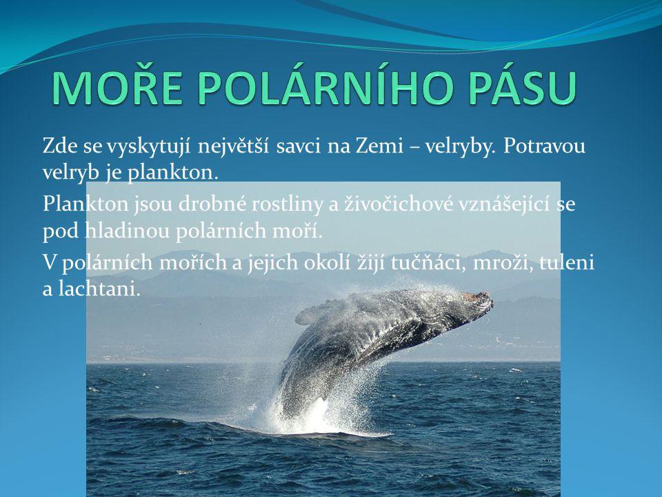 Zde se vyskytují největší savci na Zemi – velryby. Potravou velryb je plankton. Plankton jsou drobné rostliny a živočichové vznášející se pod hladinou