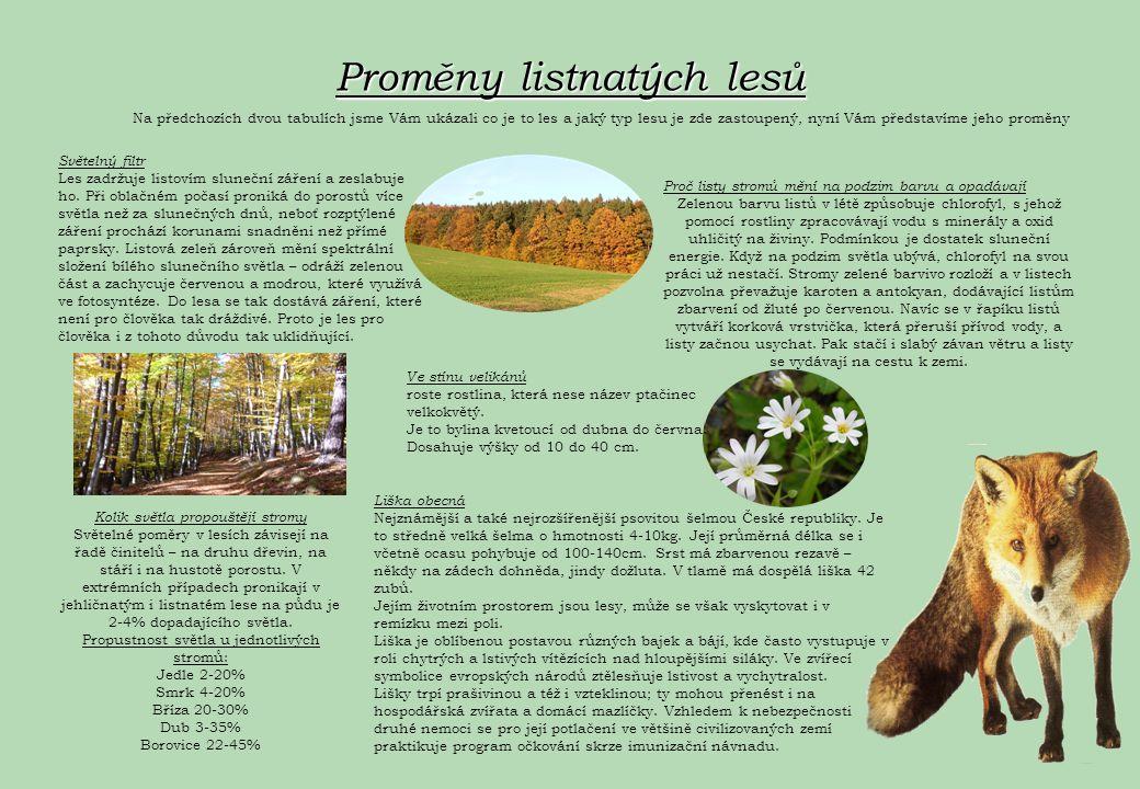 Proměny listnatých lesů Na předchozích dvou tabulích jsme Vám ukázali co je to les a jaký typ lesu je zde zastoupený, nyní Vám představíme jeho proměn