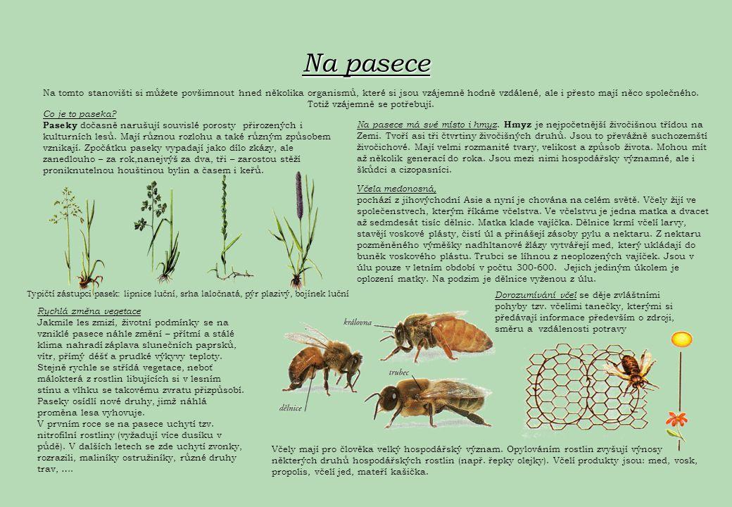 Na pasece Na tomto stanovišti si můžete povšimnout hned několika organismů, které si jsou vzájemně hodně vzdálené, ale i přesto mají něco společného.