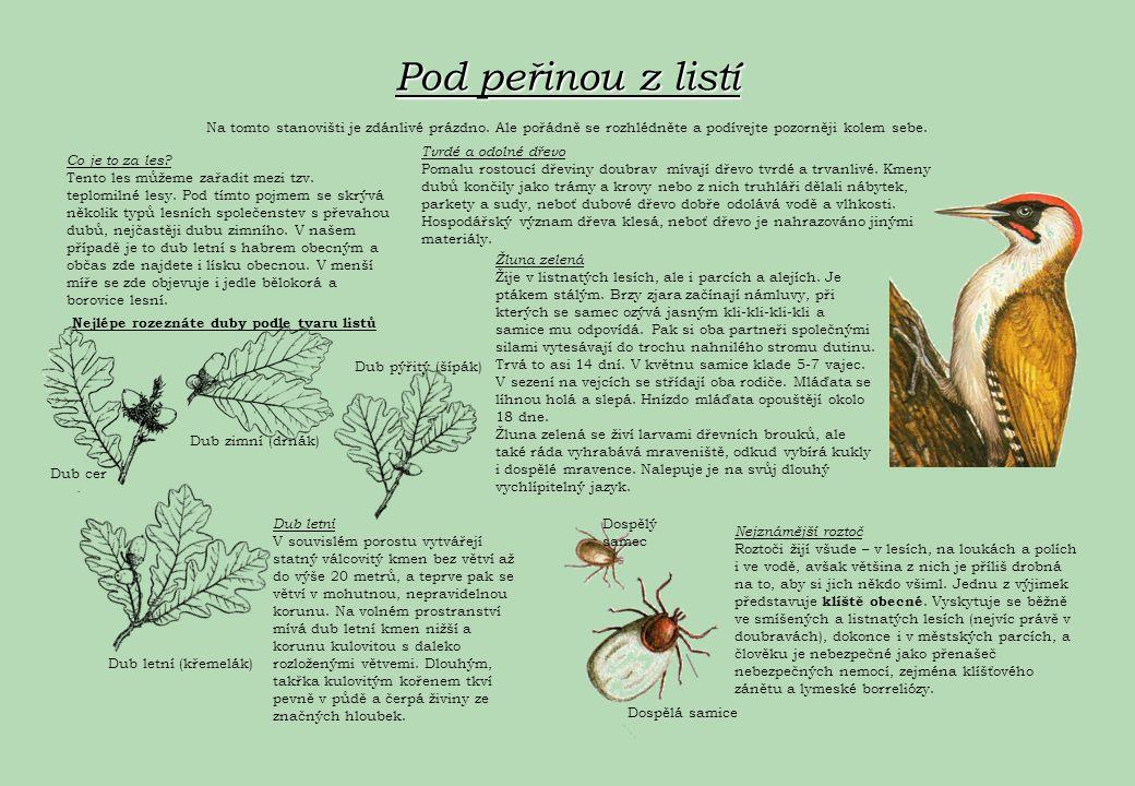 Co tu roste Les Les je porost rostlin, v němž je vyvinuté stromové patro.