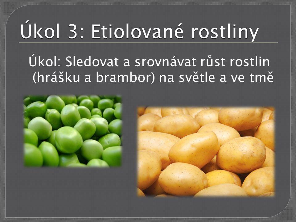 Úkol 3: Etiolované rostliny Úkol: Sledovat a srovnávat růst rostlin (hrášku a brambor) na světle a ve tmě