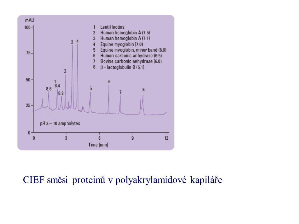 CIEF směsi proteinů v polyakrylamidové kapiláře