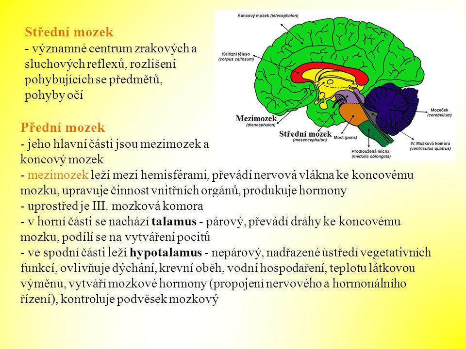 Střední mozek - významné centrum zrakových a sluchových reflexů, rozlišení pohybujících se předmětů, pohyby očí Přední mozek - jeho hlavní části jsou