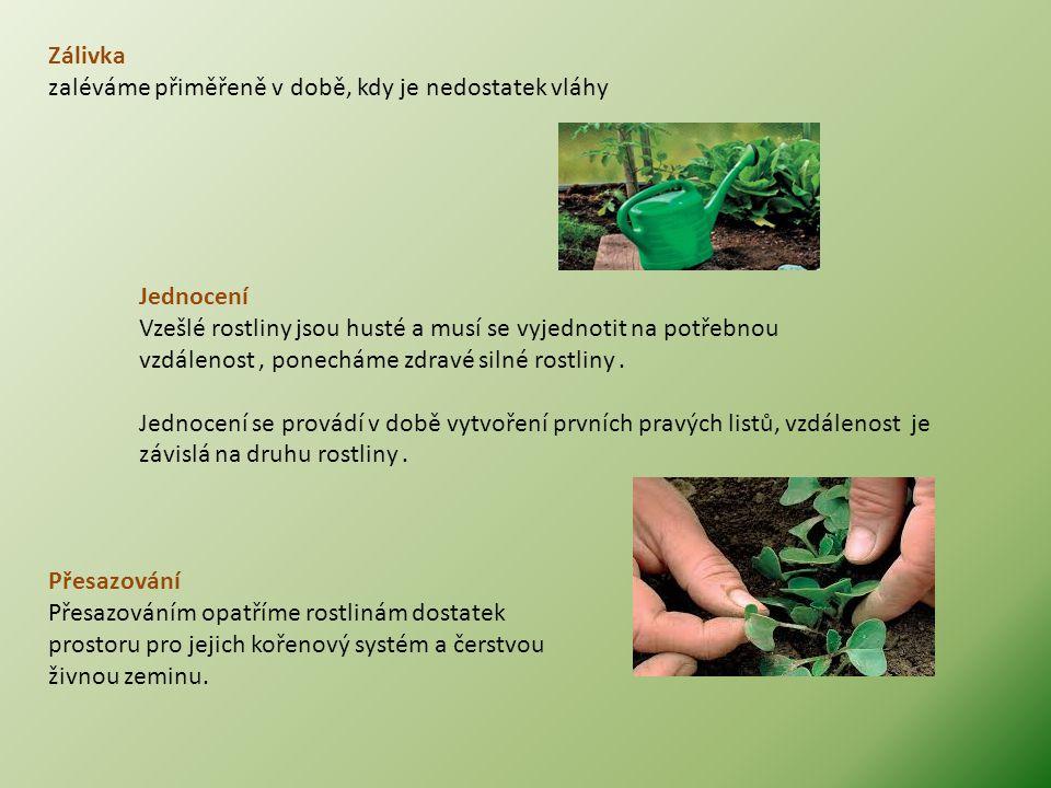 Přesazování Přesazováním opatříme rostlinám dostatek prostoru pro jejich kořenový systém a čerstvou živnou zeminu. Jednocení Vzešlé rostliny jsou hust