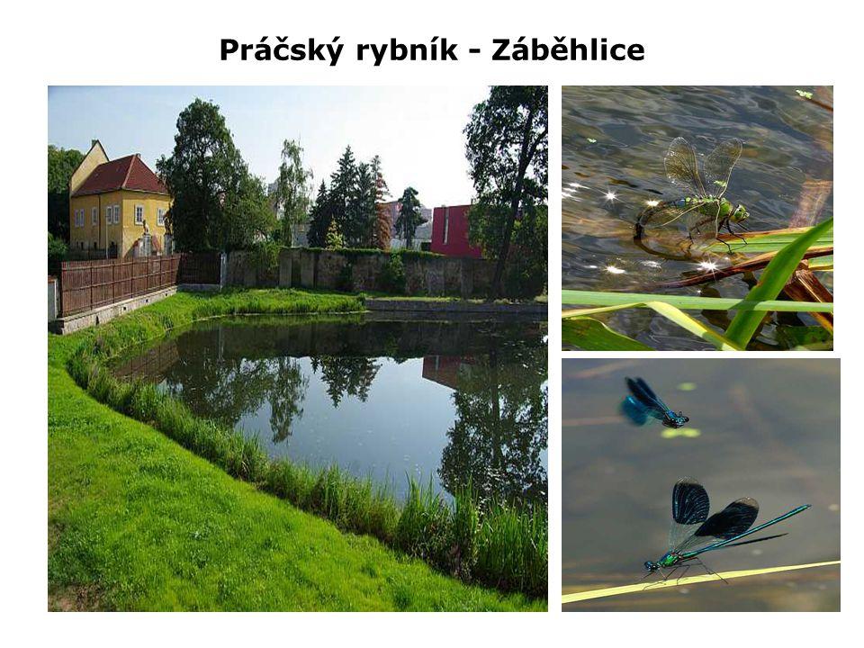 Práčský rybník - Záběhlice