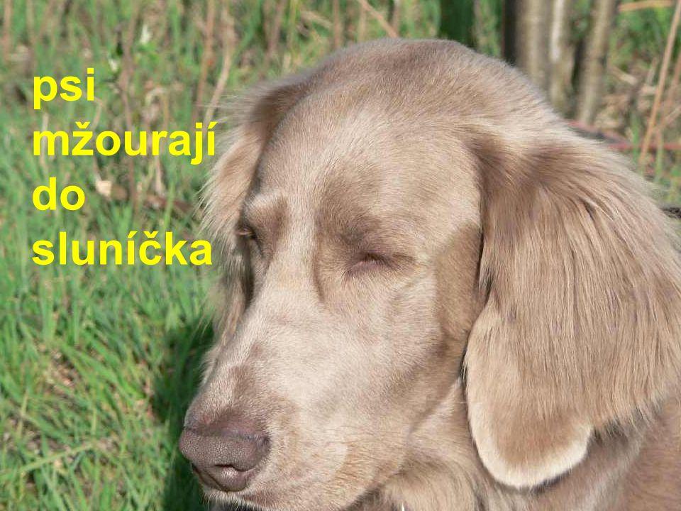 psi mžourají do sluníčka