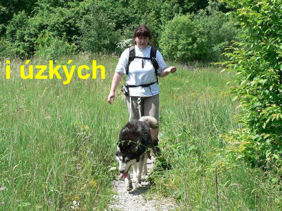 Dogtrekařská sezóna začíná www.dogtrekking.info Termínový kalendář na: