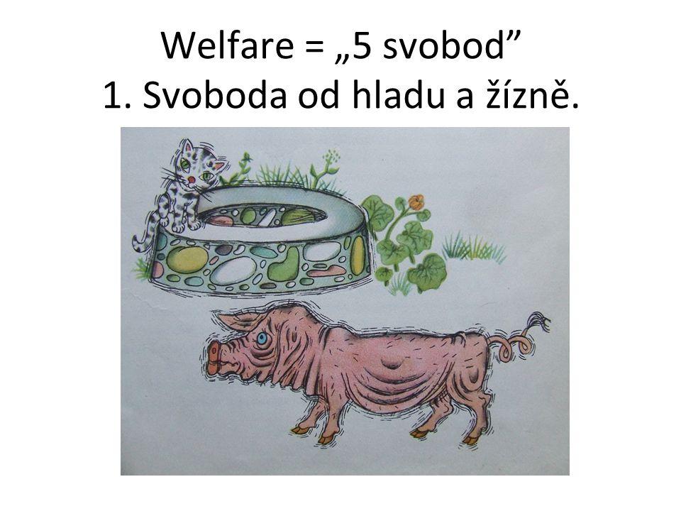 """Welfare = """"5 svobod"""" 1. Svoboda od hladu a žízně. :"""