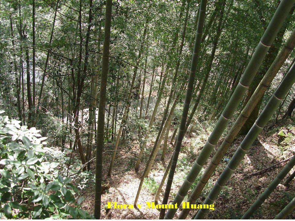 Flora v Mount Huang