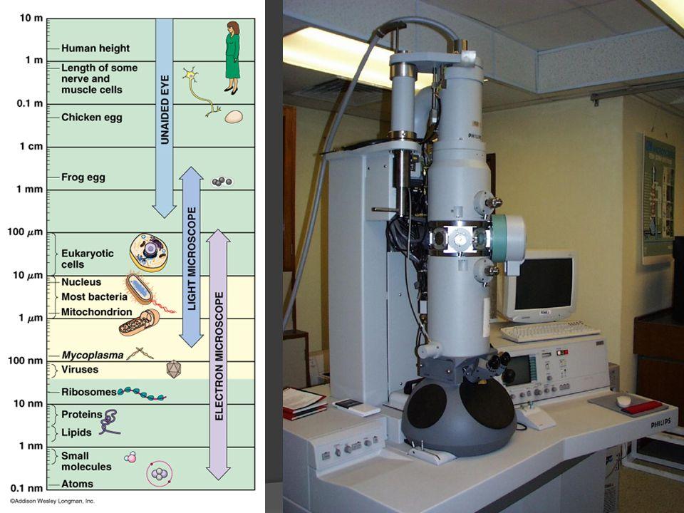 Příprava preparátů pro TEM chemickou cestou in situ preparáty