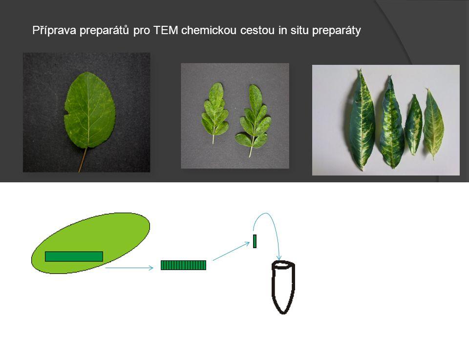 Vysušené biologické objekty jsou téměř elektricky a tepelně nevodivé.
