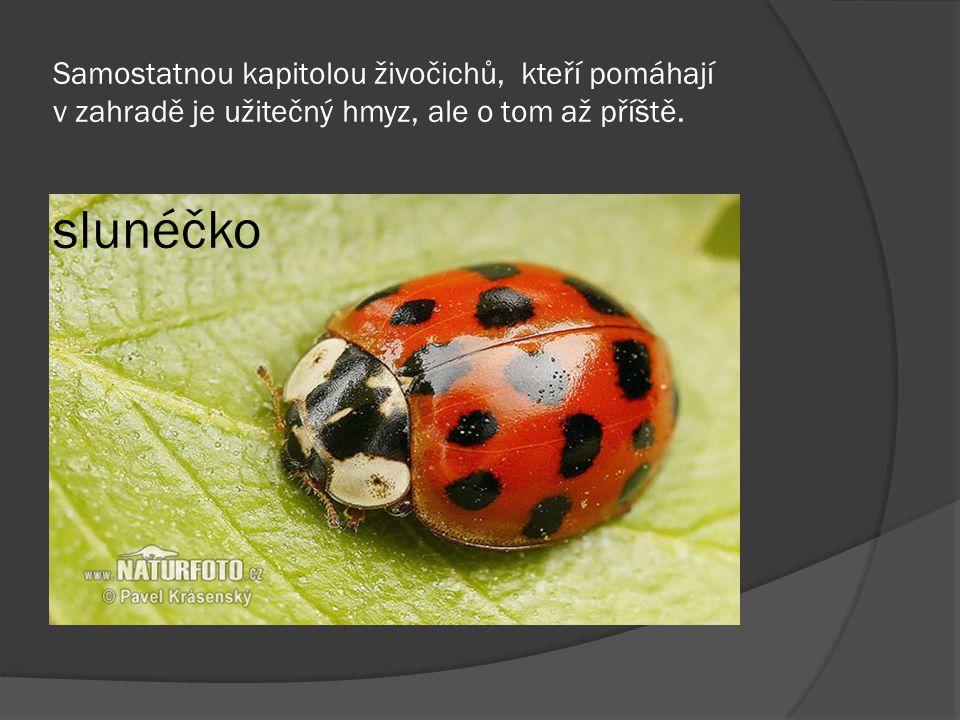 Samostatnou kapitolou živočichů, kteří pomáhají v zahradě je užitečný hmyz, ale o tom až příště. slunéčko