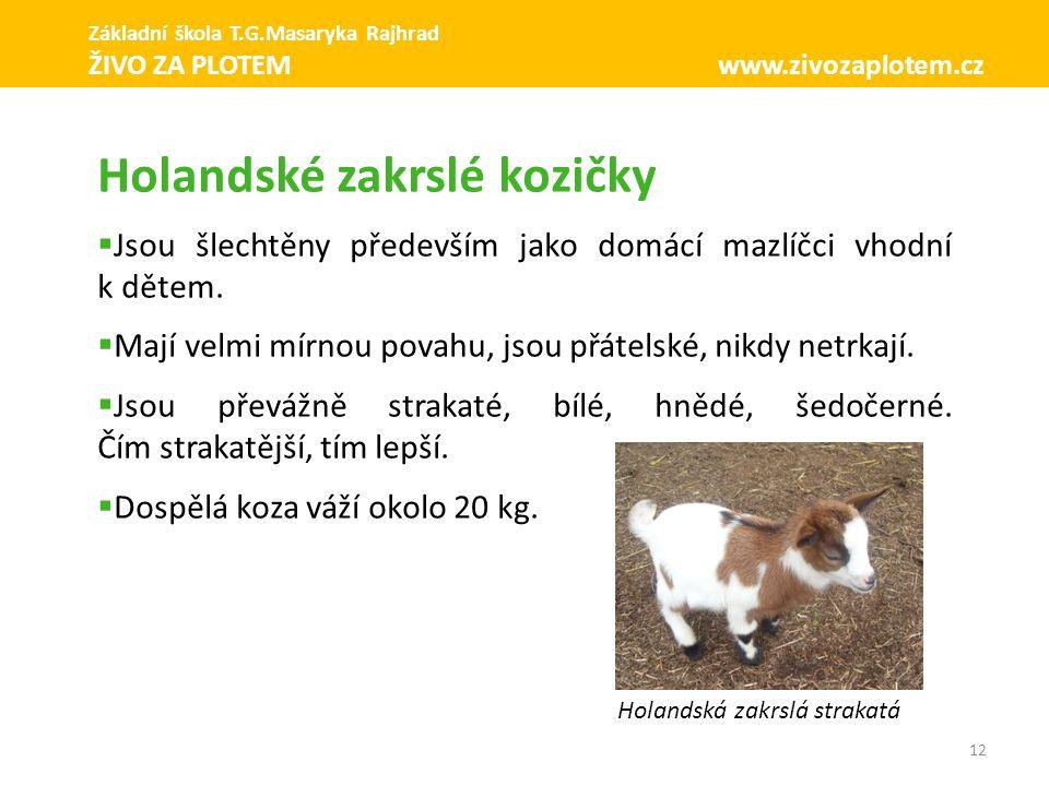 12 Holandské zakrslé kozičky  Jsou šlechtěny především jako domácí mazlíčci vhodní k dětem.  Mají velmi mírnou povahu, jsou přátelské, nikdy netrkaj