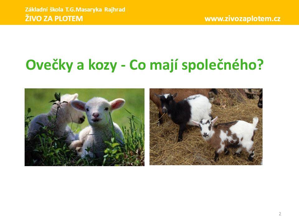 13 Holandská zakrslá Základní škola T.G.Masaryka Rajhrad ŽIVO ZA PLOTEM www.zivozaplotem.cz