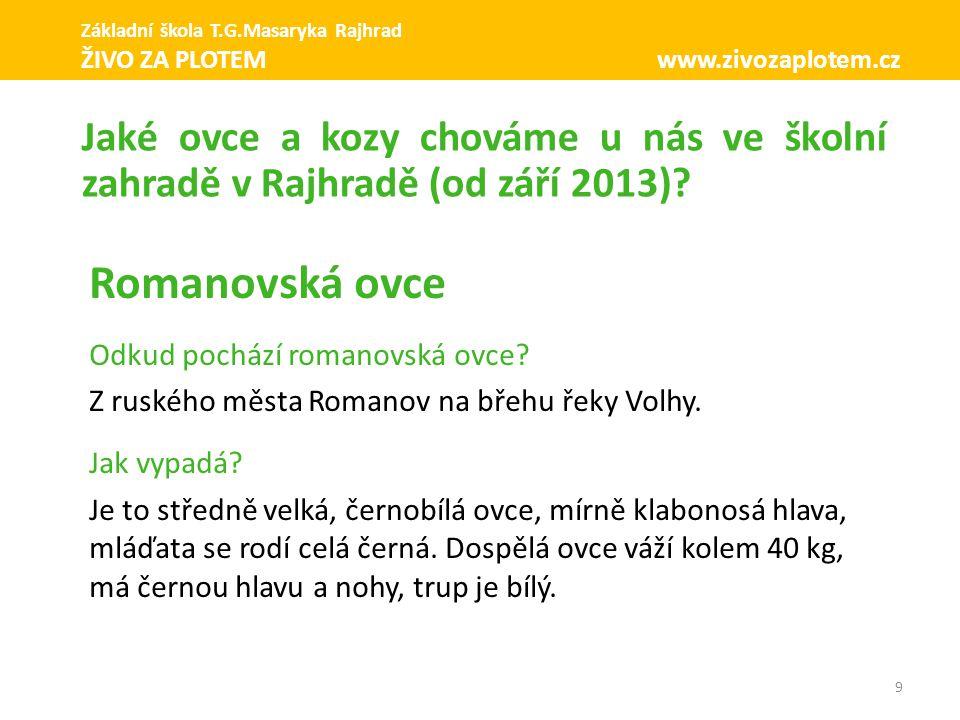 10 Ovce romanovská Základní škola T.G.Masaryka Rajhrad ŽIVO ZA PLOTEM www.zivozaplotem.cz