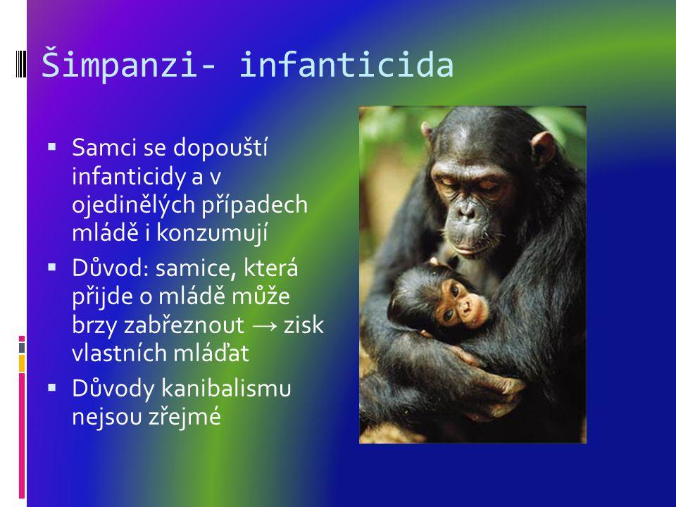 Šimpanzi- infanticida  Samci se dopouští infanticidy a v ojedinělých případech mládě i konzumují  Důvod: samice, která přijde o mládě může brzy zabřeznout → zisk vlastních mláďat  Důvody kanibalismu nejsou zřejmé