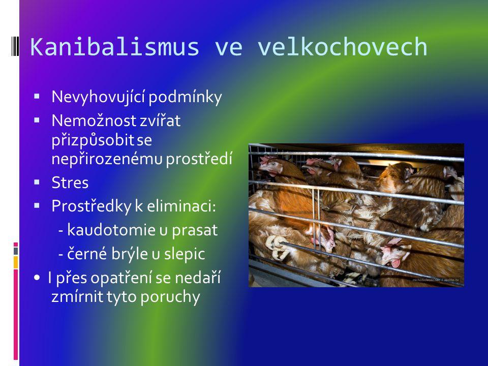 Kanibalismus ve velkochovech  Nevyhovující podmínky  Nemožnost zvířat přizpůsobit se nepřirozenému prostředí  Stres  Prostředky k eliminaci: - kaudotomie u prasat - černé brýle u slepic I přes opatření se nedaří zmírnit tyto poruchy