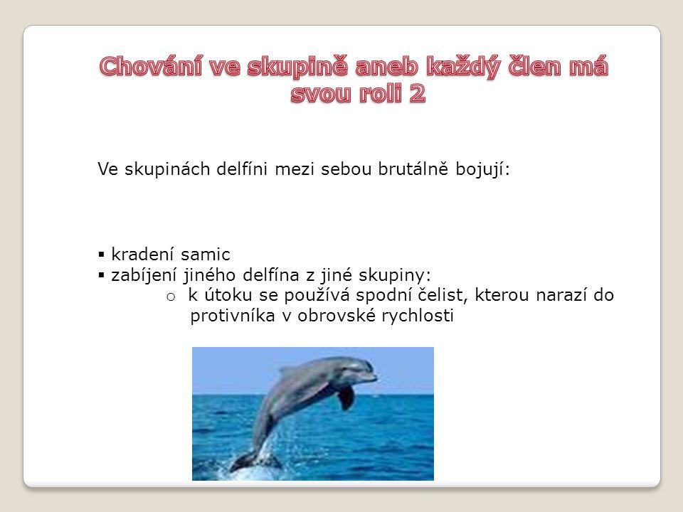 Ve skupinách delfíni mezi sebou brutálně bojují:  kradení samic  zabíjení jiného delfína z jiné skupiny: o k útoku se používá spodní čelist, kterou