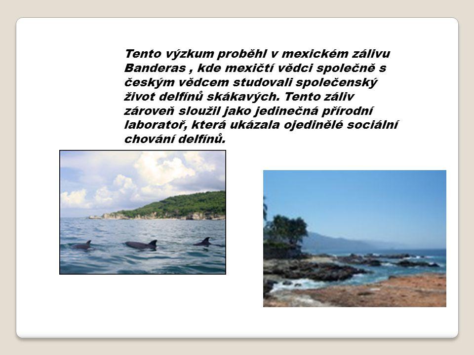 Tento výzkum proběhl v mexickém zálivu Banderas, kde mexičtí vědci společně s českým vědcem studovali společenský život delfínů skákavých. Tento záliv