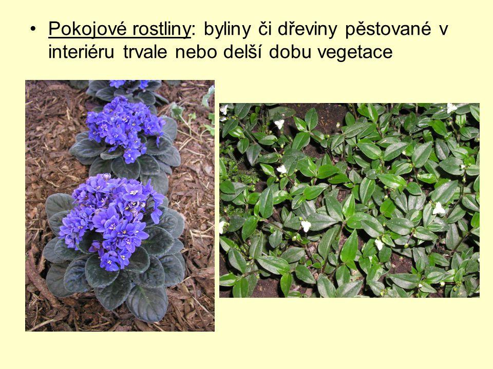 Pokojové rostliny: byliny či dřeviny pěstované v interiéru trvale nebo delší dobu vegetace