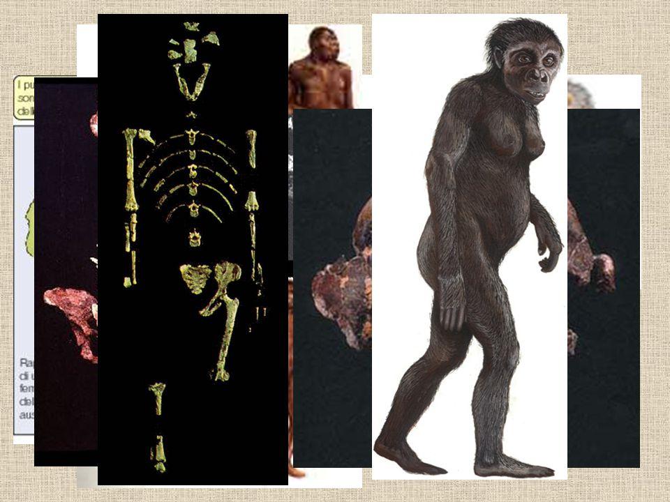 Homo erectus –Von Koeningswald v roce 1936 objevil v roce 1936 na ostrově Jáva ostatky dítě z rodu Homo Erectus.