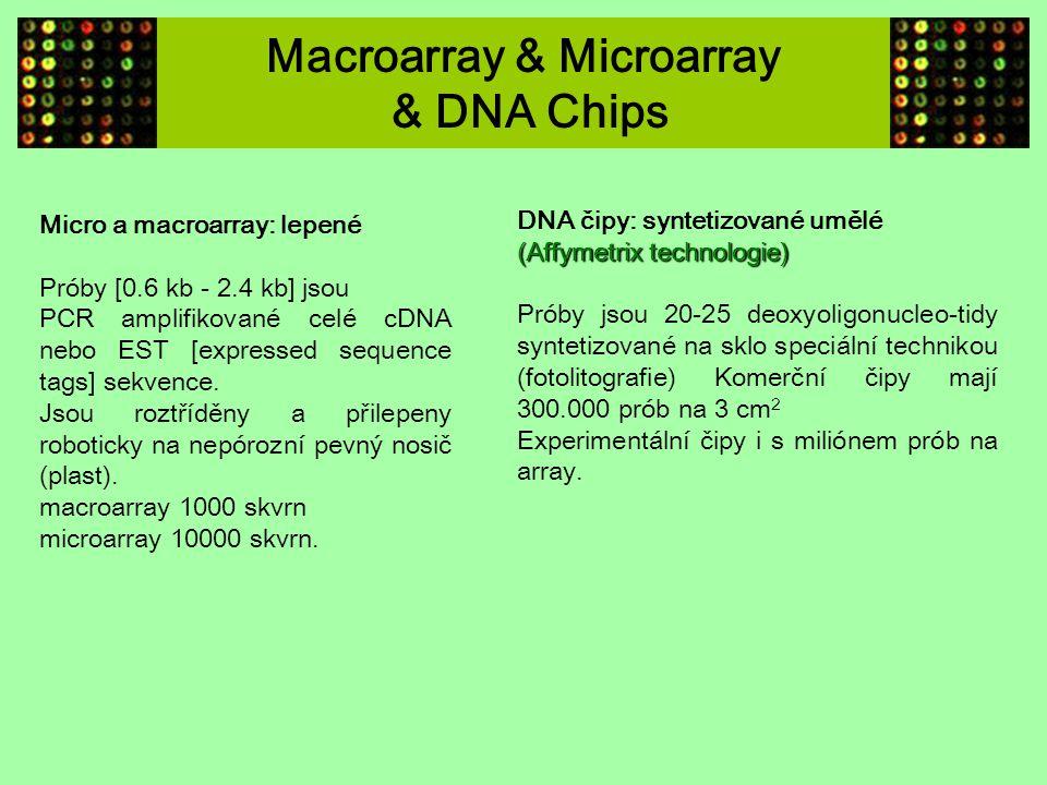 Macroarray & Microarray & DNA Chips Micro a macroarray: lepené Próby [0.6 kb - 2.4 kb] jsou PCR amplifikované celé cDNA nebo EST [expressed sequence t