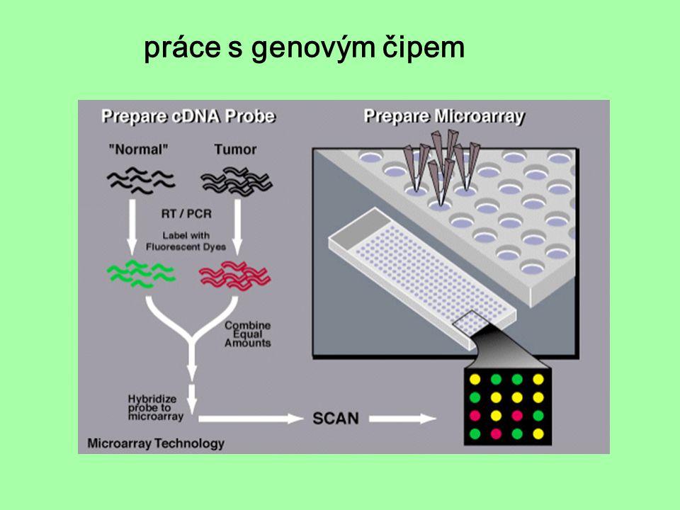 práce s genovým čipem