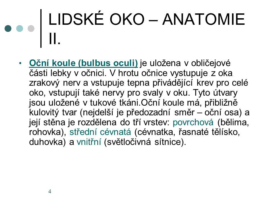 4 LIDSKÉ OKO – ANATOMIE II. Oční koule (bulbus oculi) je uložena v obličejové části lebky v očnici. V hrotu očnice vystupuje z oka zrakový nerv a vstu