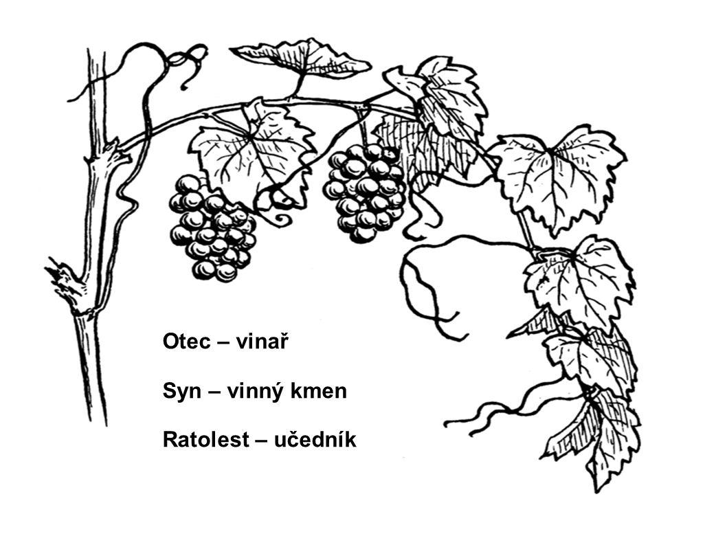 Otec – vinař Syn – vinný kmen Ratolest – učedník