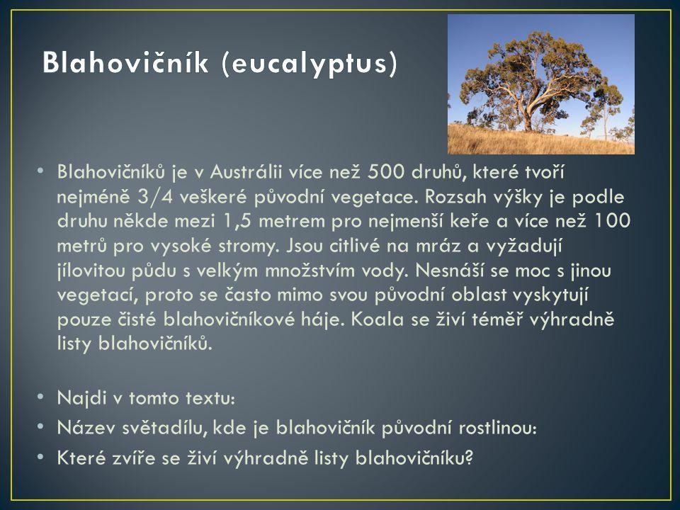 Blahovičníků je v Austrálii více než 500 druhů, které tvoří nejméně 3/4 veškeré původní vegetace. Rozsah výšky je podle druhu někde mezi 1,5 metrem pr