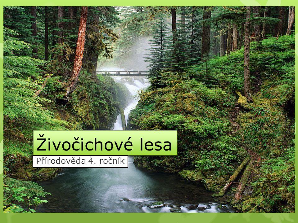 Živočichové lesa Přírodověda 4. ročník