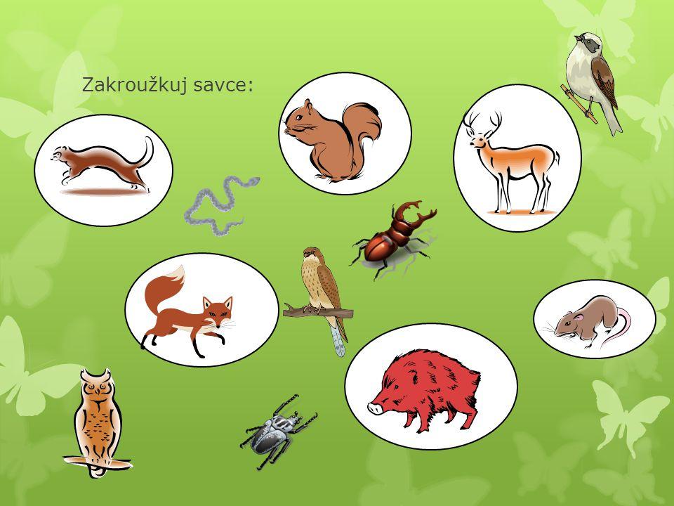Přečti si následující text a splň zadaný úkol:  Ptáci jsou pro lidi ekonomicky důležití; mnoho z nich je pro ně zdrojem potravy, získávané buď lovem (čižba, myslivost) nebo chovem, poskytují však i jiné produkty.