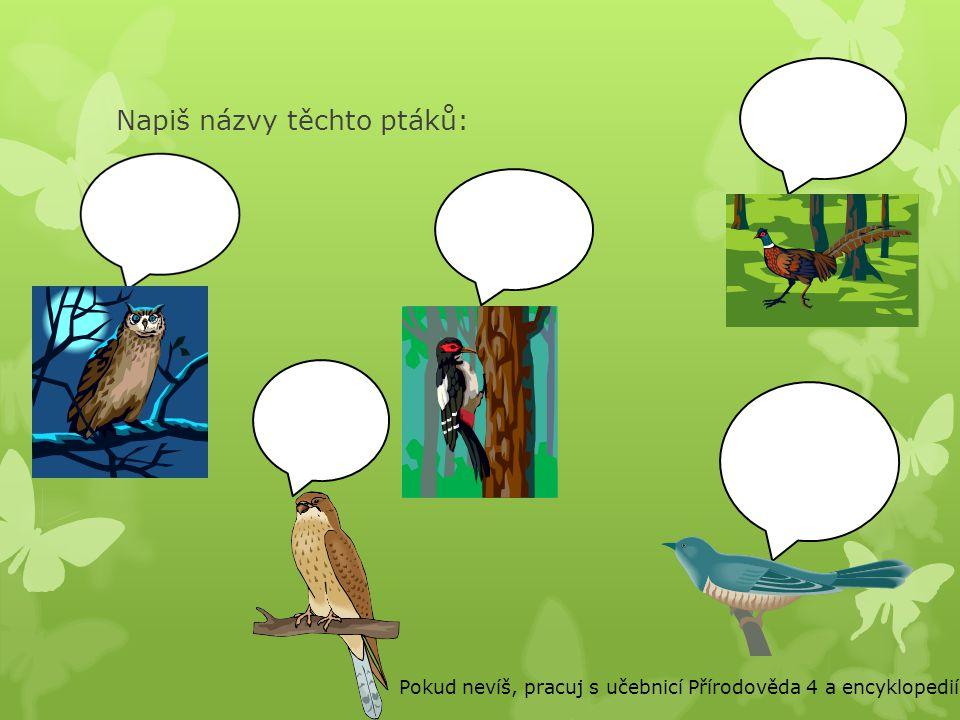 Napiš názvy těchto ptáků: Pokud nevíš, pracuj s učebnicí Přírodověda 4 a encyklopedií.