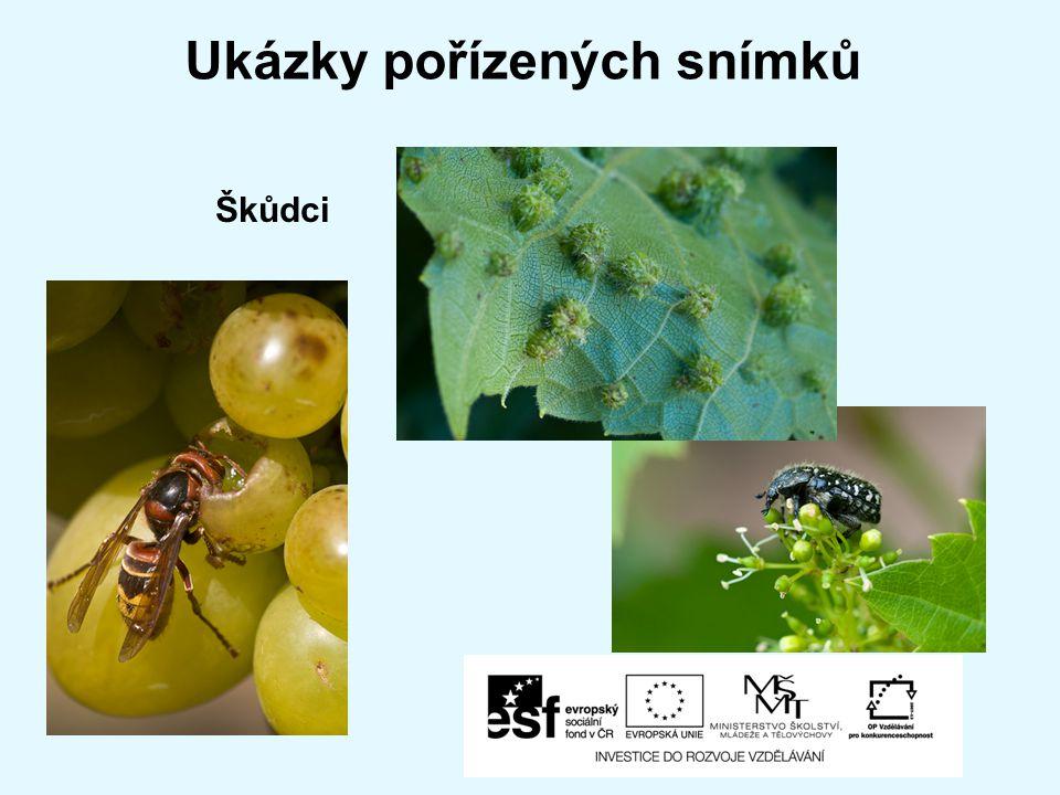 Ukázky pořízených snímků Škůdci