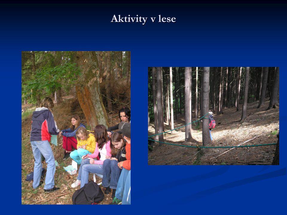 Aktivity v lese