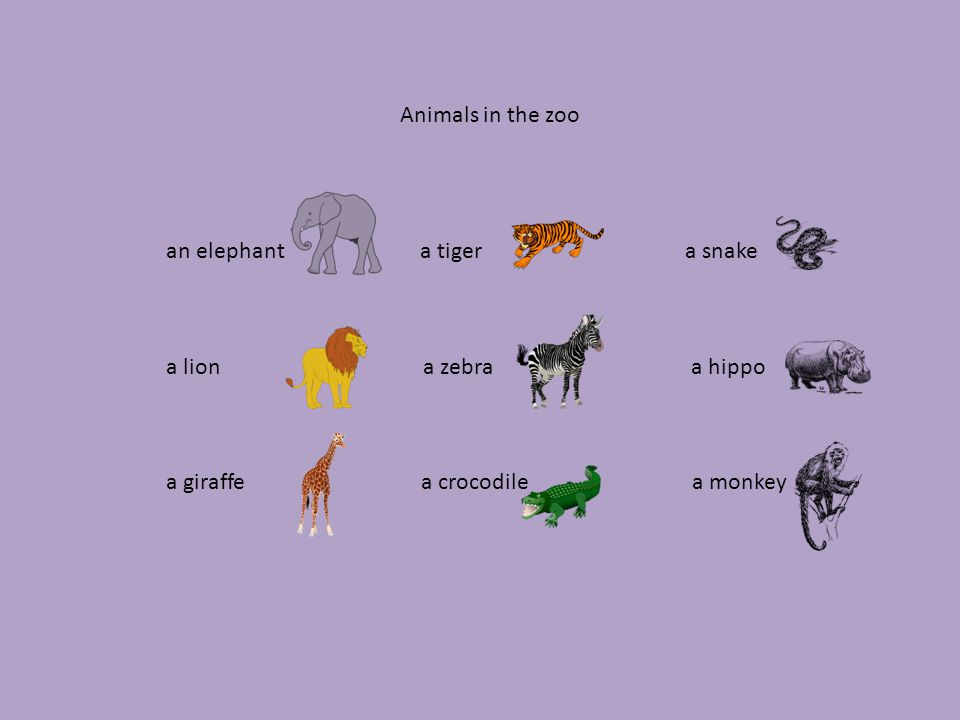 Najdi a oprav chyby: a girrafe a monkey a lion an elephant a tiger a hippo a snake a zebra a crocodile Autodiktát: