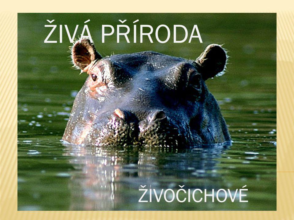  Na souši, ve vodách i v povětří žije mnoho různých živočichů.